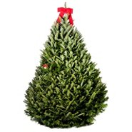 Sears Real Fresh Cut Christmas Trees