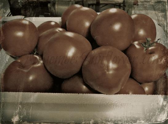 #tomato #31daysofphotos