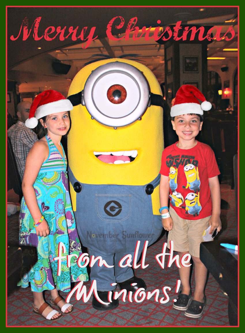 Merry Christmas & Happy New Year from the entire Sunflower Family