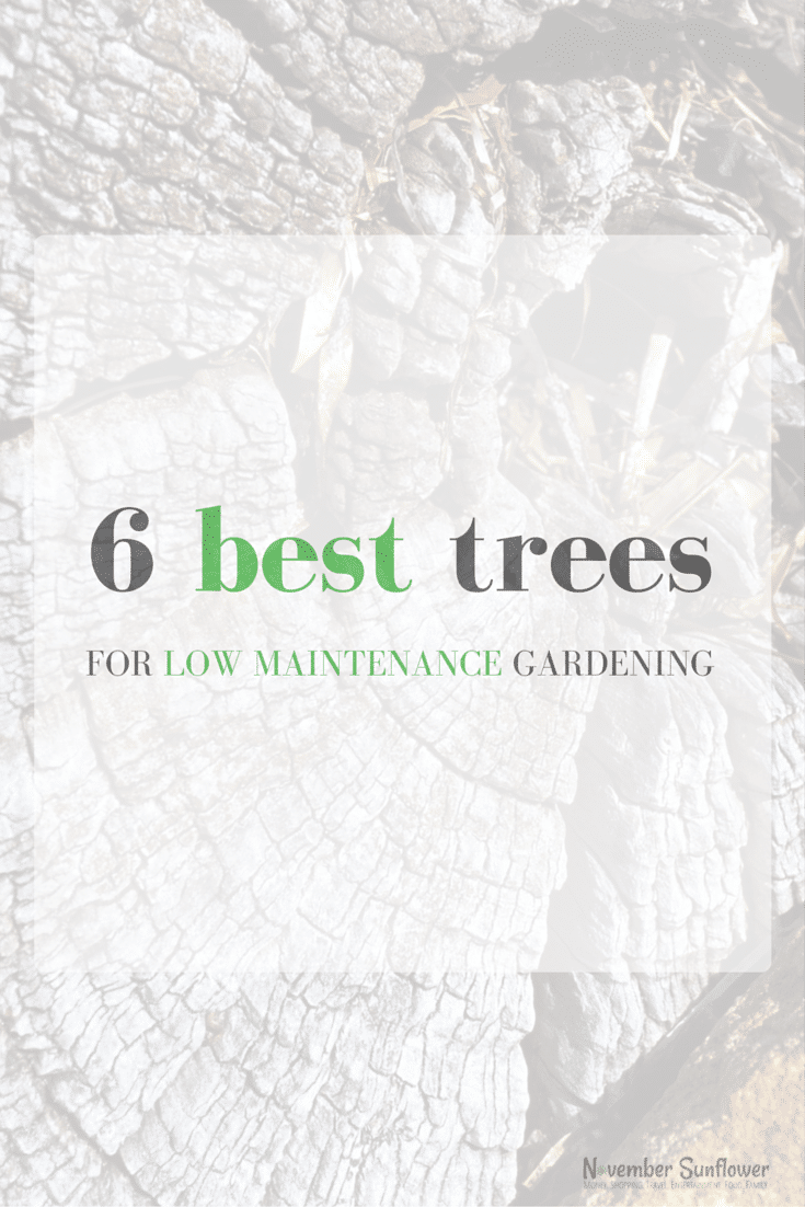 6 best trees for low maintenance gardening