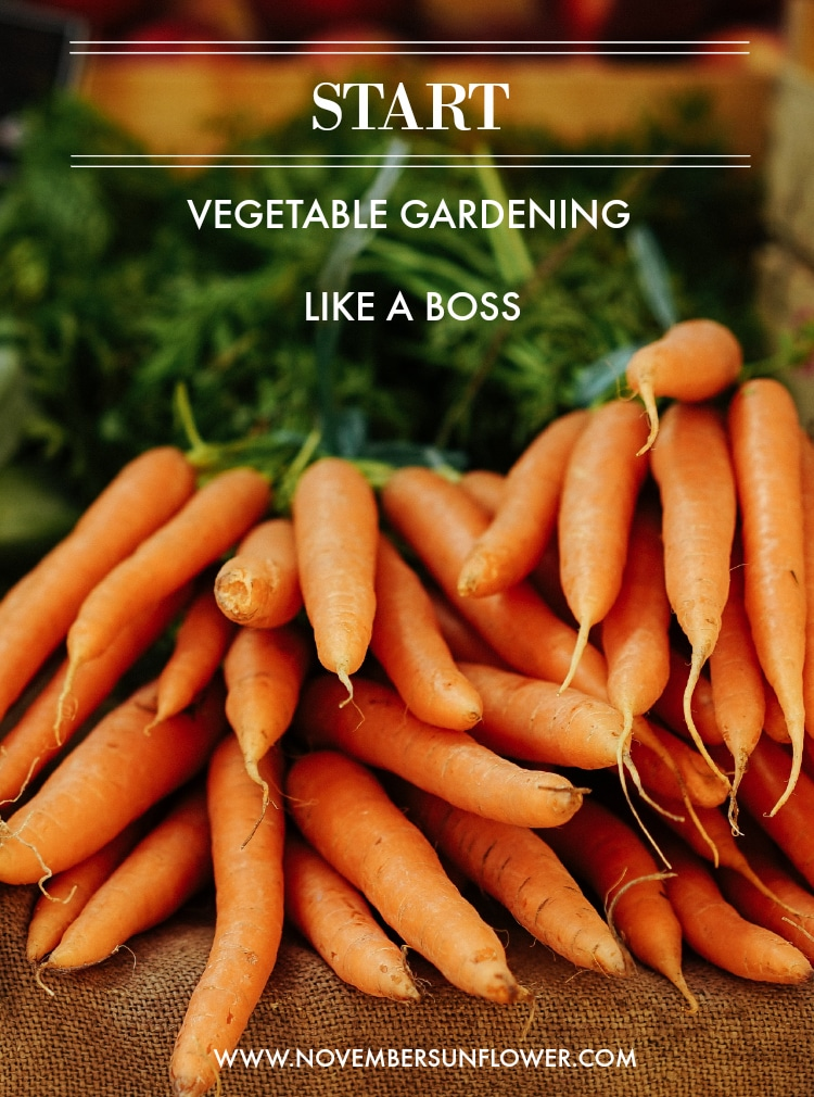 start vegetable gardening like a boss