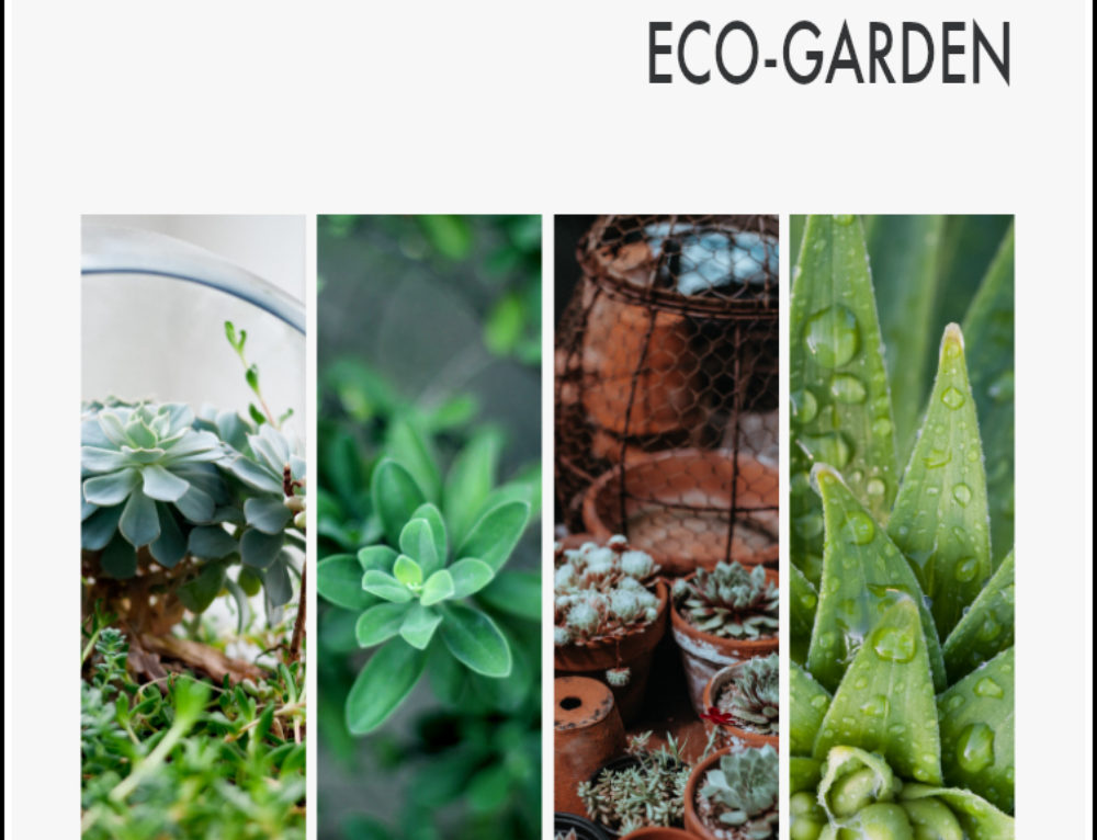 Simple tips for creating an eco-garden