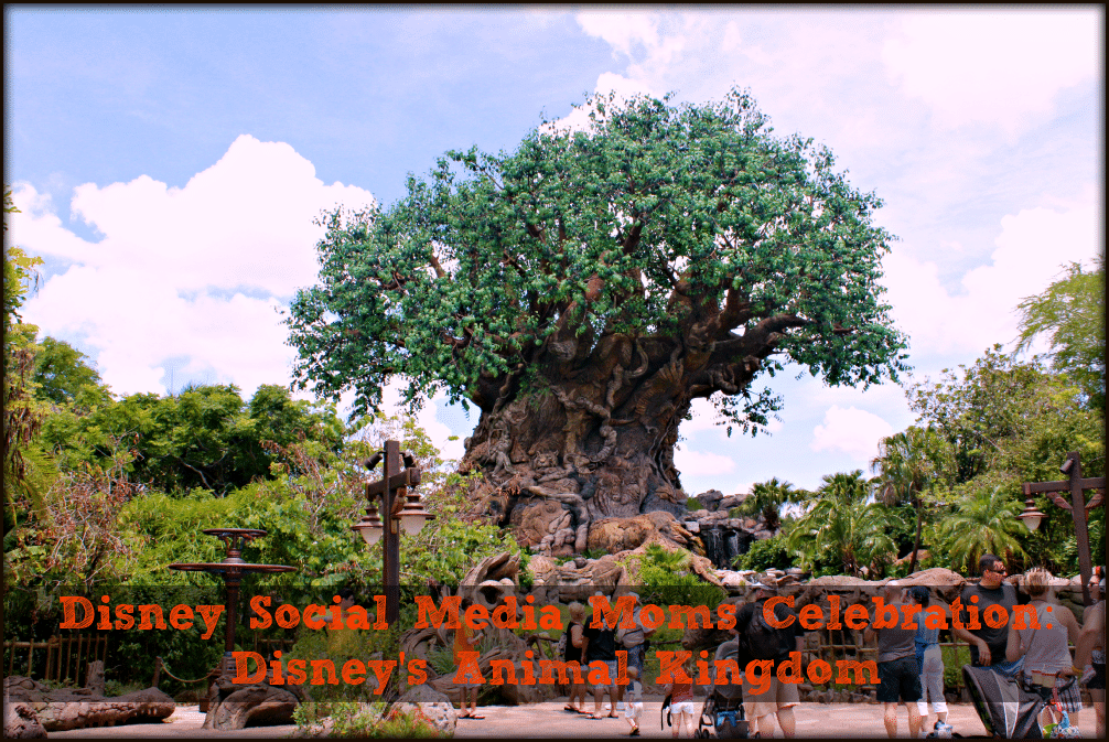 Disney Social Media Moms Celebration: Disney's Animal Kingdom