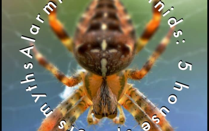 Alarming Arachnids - 5 Myths about House Spiders
