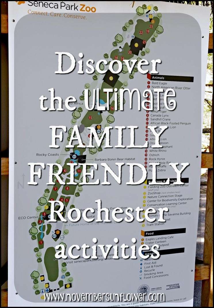 family friendly Rochester