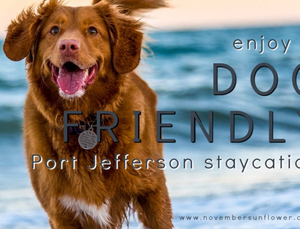 Enjoy a dog friendly Port Jefferson Staycation