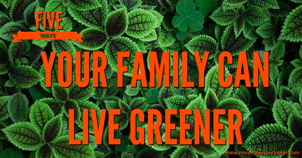 green plants - five ways your family can live greener