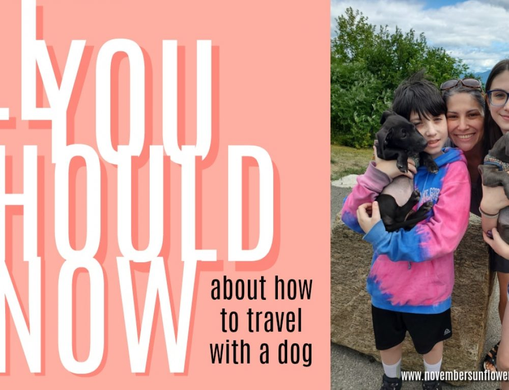 All You Should Know About How to Travel with a Dog