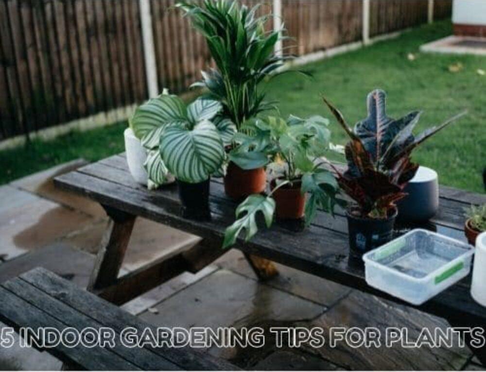 5 Indoor Gardening Tips for Plants