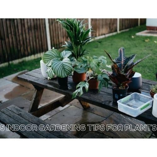 indoor gardening tips for plants